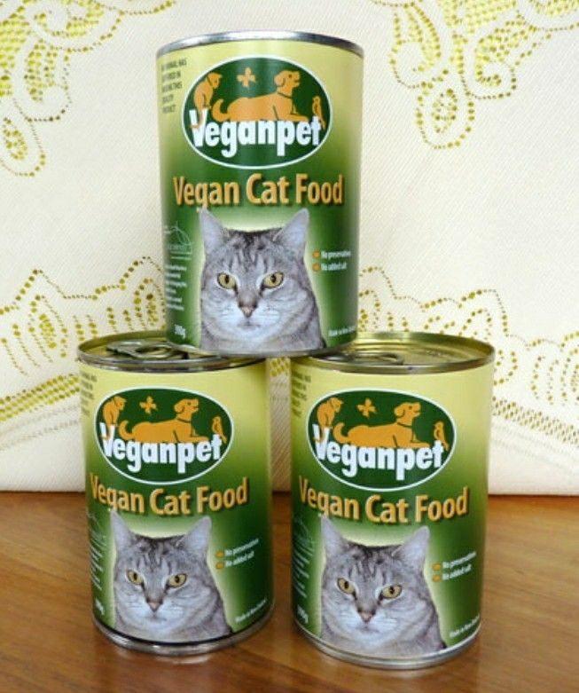 貓咪「會吃肉殺生」很殘忍 吃素女逼男友:把貓丟了「不然分手」