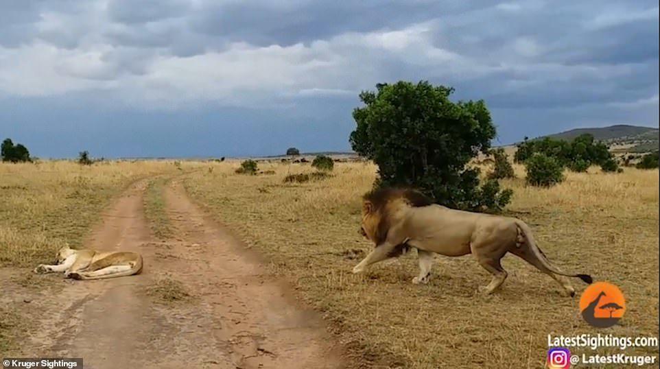 母獅起床氣