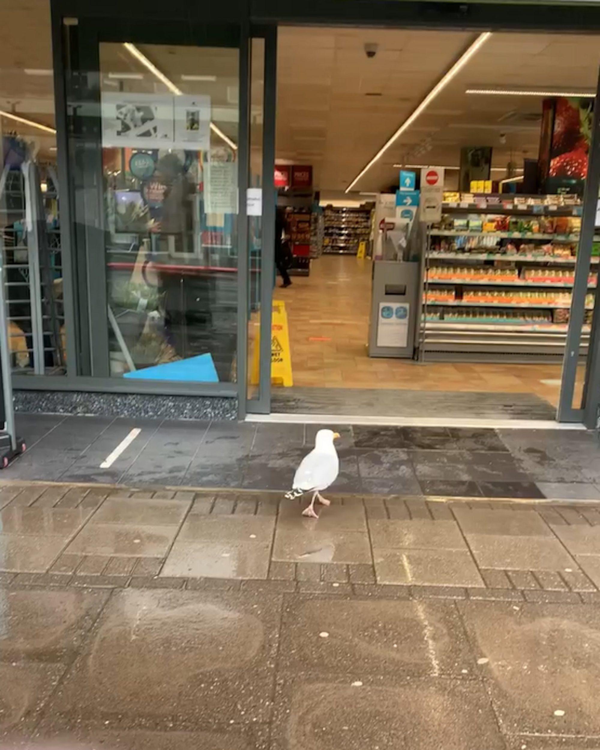 海鷗偷三明治