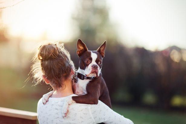 帶愛犬安樂死...鄰居女兒闖入「偷狗救牠一命」 主人氣瘋:永不會原諒她