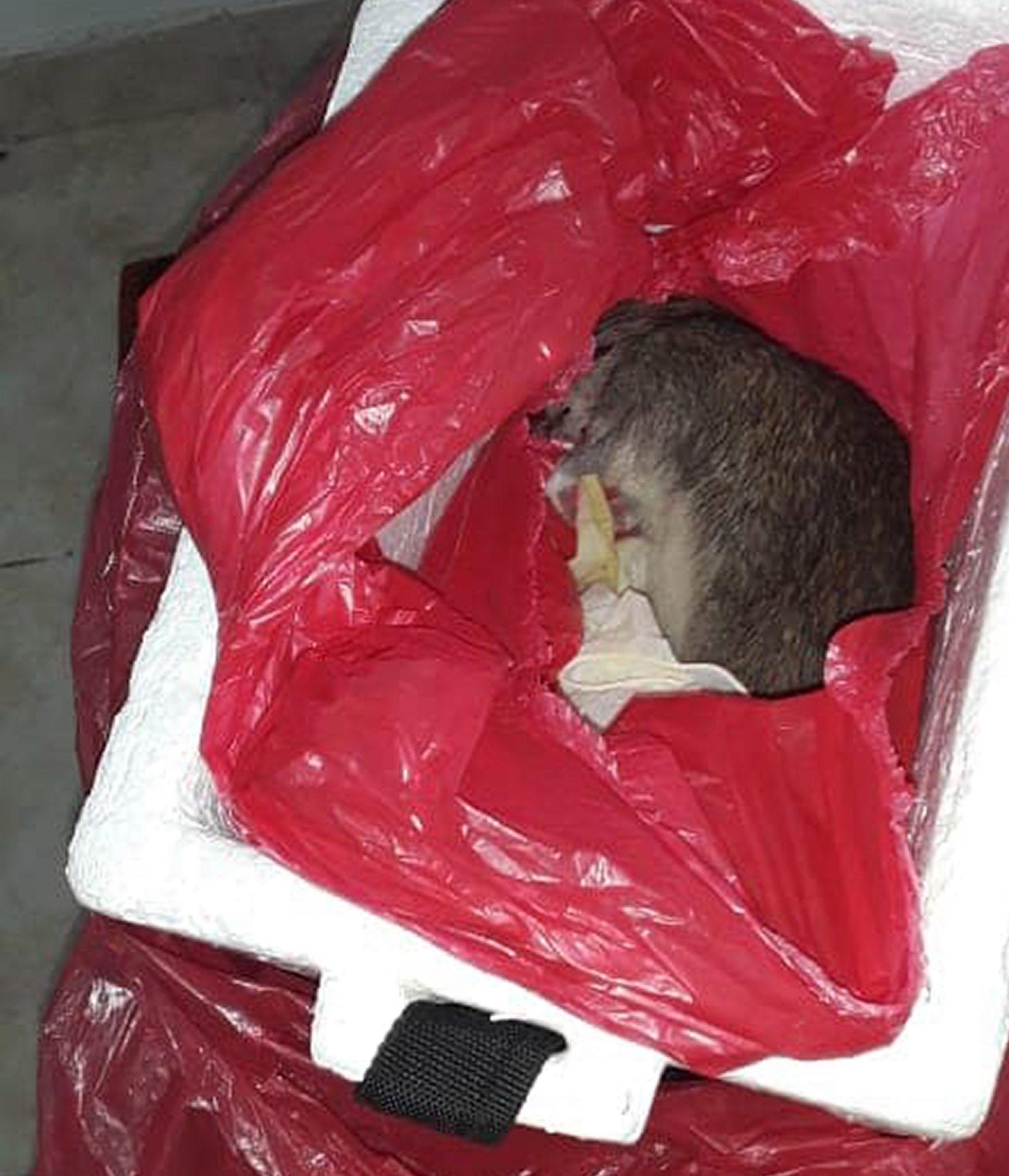 死老鼠代替女嬰遺體