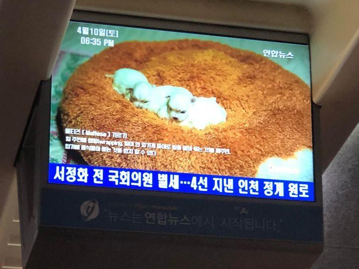 韓國酷東西