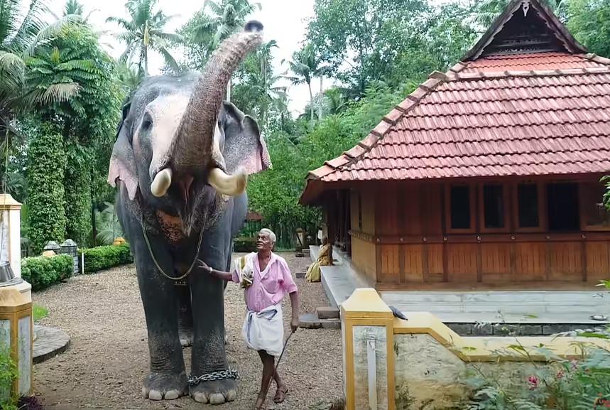 25年羈絆!大象走2小時參加喪禮 「和象夫道別」完成老友遺願