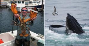 遭鯨魚一口吞下眼前全黑!「30秒後一絲光線」漁夫奇蹟生還