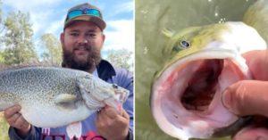 影/釣客幫魚漱口掉出「未消化老鼠」 鼠患反讓鱈魚飽餐肥滋滋