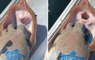 影/騷癢魟魚寶寶笑稱「逗牠大笑」 專家氣瘋:快死了
