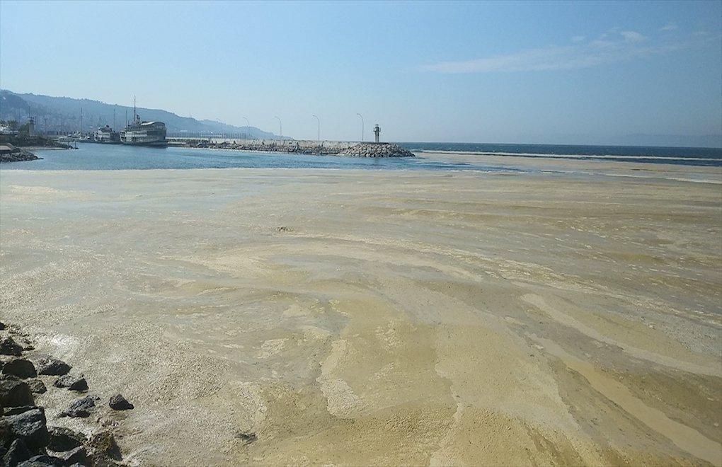 大海突出現「一整片灰色」佈滿港口!大量生物恐「面臨浩劫」