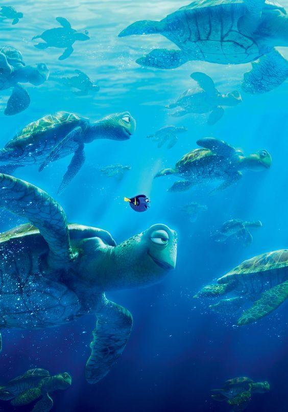 大堡礁绿蠵龟