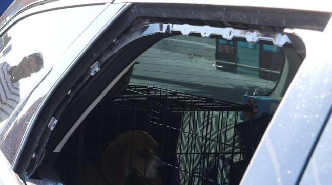 警察破窗救狗反被罵