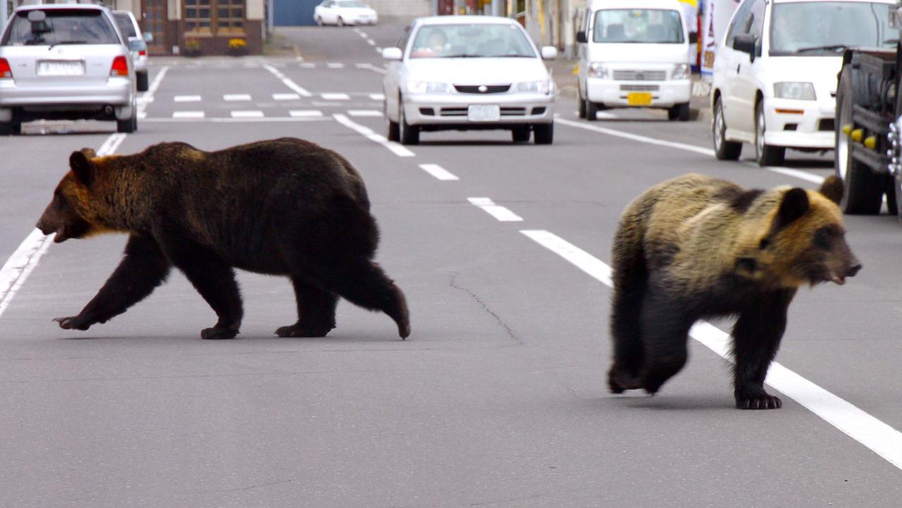 上学遇到熊