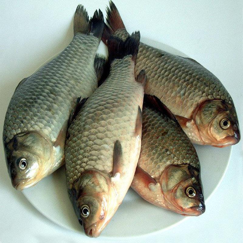 不是鯽魚是鯉魚