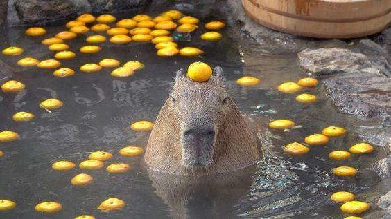 柚子浴被捏爆